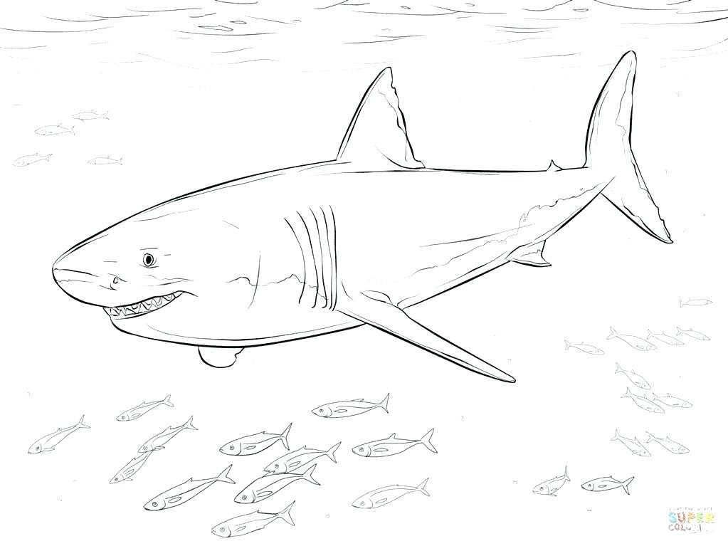 1023x767 Great White Shark Coloring Page Whale Shark Coloring Page Gallery