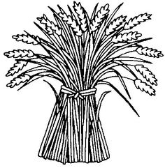 236x241 Sheaves Of Wheat Coloring Page Books!