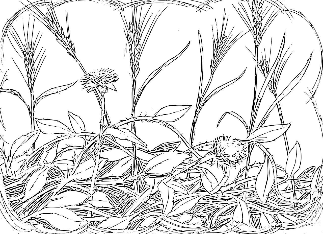 1280x926 Wheat Field Coloring Page