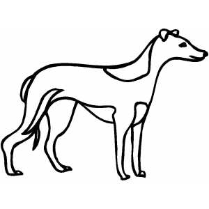 300x300 Greyhound Coloring Page
