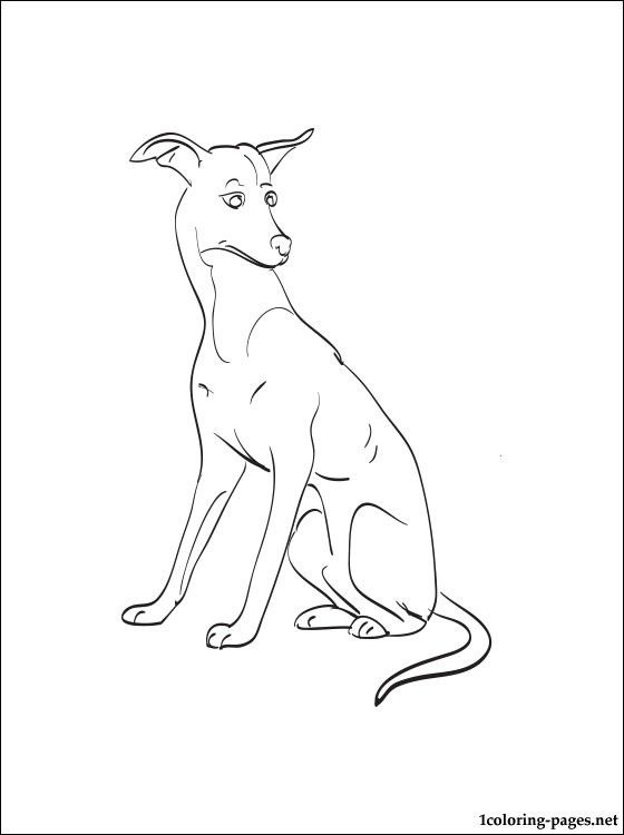 560x750 Italian Greyhound Coloring Page Coloring Pages
