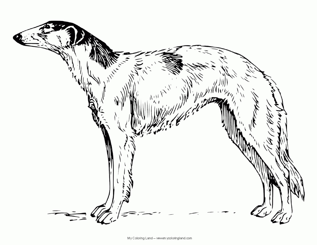 1056x816 Lavishly Whippet Coloring Pages Greyhound Anim