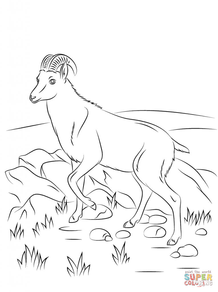 764x1024 Nilgiri Tahr Wild Goat For Coloring Pages
