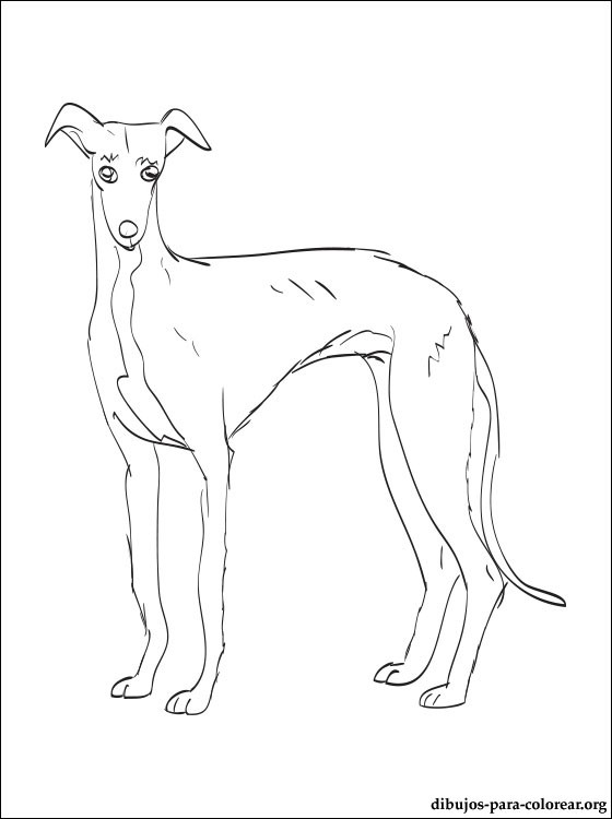 560x750 Pluto Coloring Pages Selection Free Coloring Pages