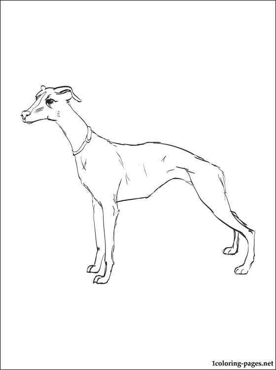 560x750 Whippet Coloring Page Coloring Pages