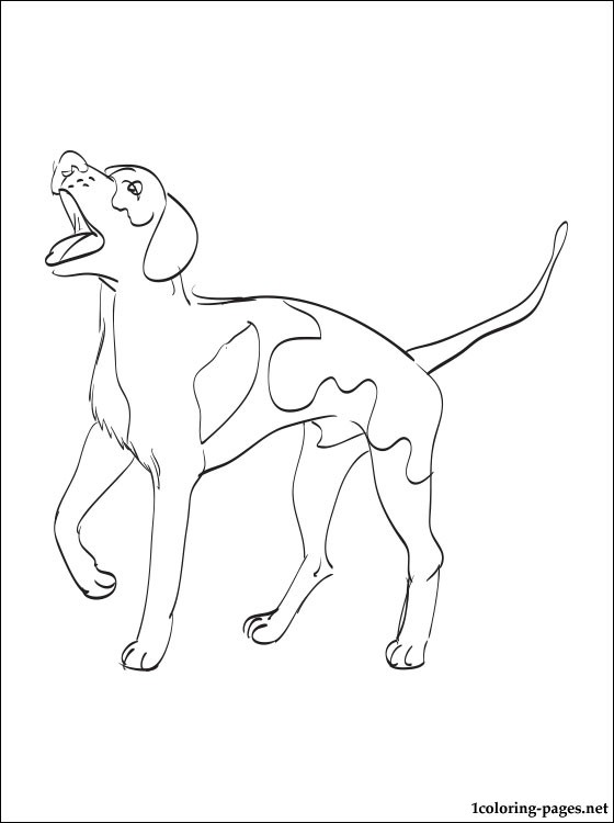 560x750 American English Coonhound Coloring Page Coloring Pages