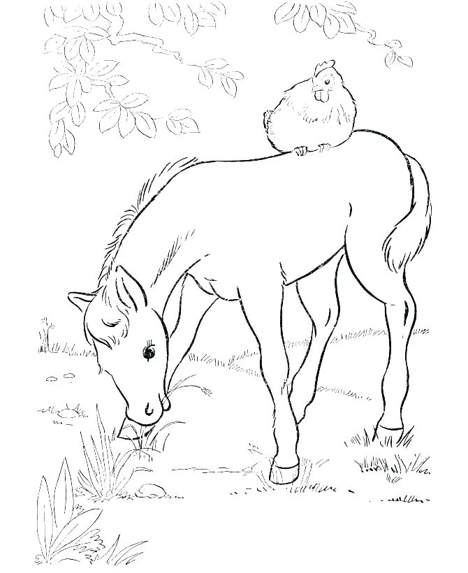 670x820 Horse Jumping Coloring Pages Realistic Horse Coloring Pages Horse