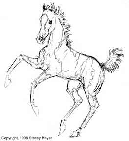 264x288 Paint Horse Coloring Pages