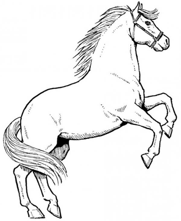 600x733 Awesome Male Horse In Horses Coloring Page