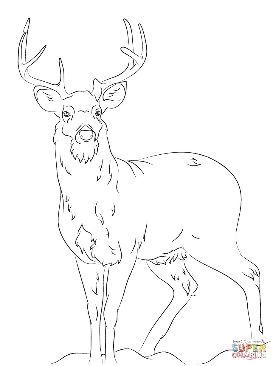 916x1228 White Tail Deer Coloring Page Free Printable Pages Ripping Of Acpra