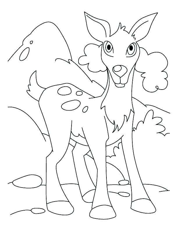 612x792 White Tailed Deer Coloring Page Whitetail Deer Coloring Pages