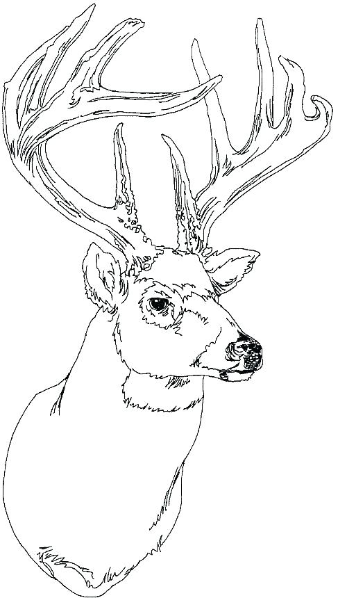 500x860 White Tailed Deer Coloring Page