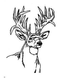 222x300 Best Deer Images On Deer, Coloring Sheets