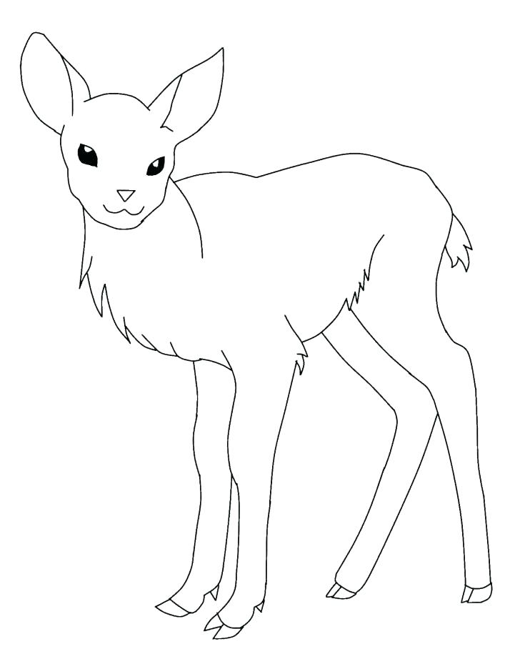728x908 Whitetail Deer Coloring Pages
