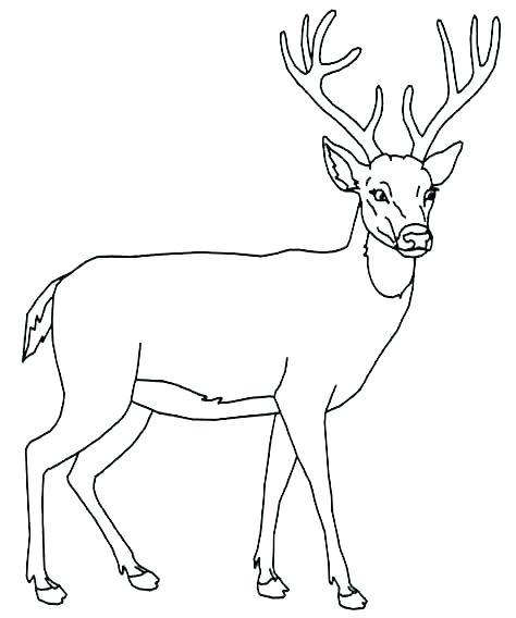 474x568 Coloring Page Deer