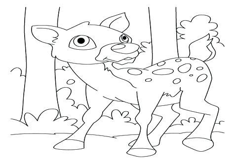 476x333 Deer Coloring Page