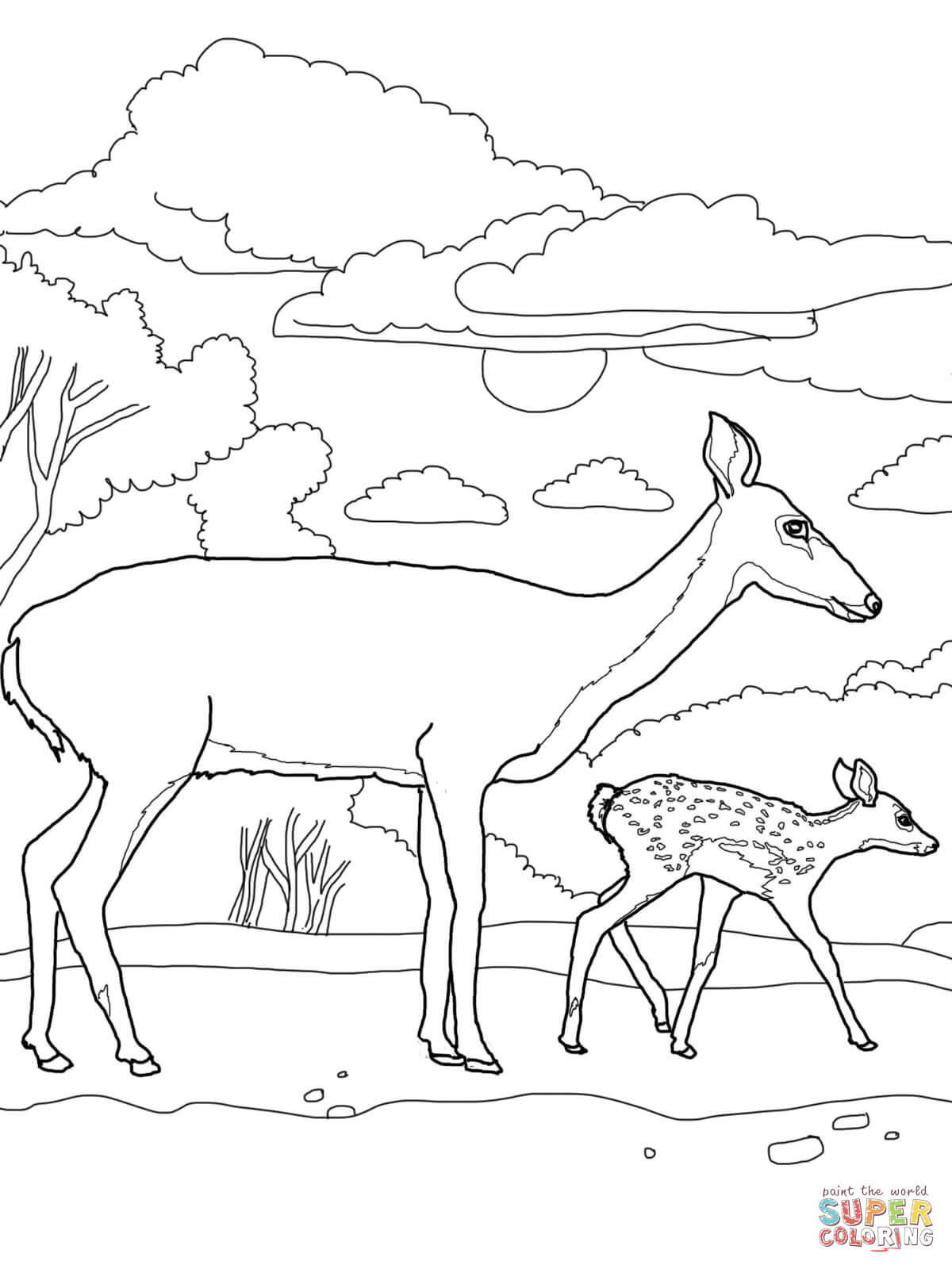 1200x1600 White Tail Deer Ba And Mother Coloring Page Free Printable Deer