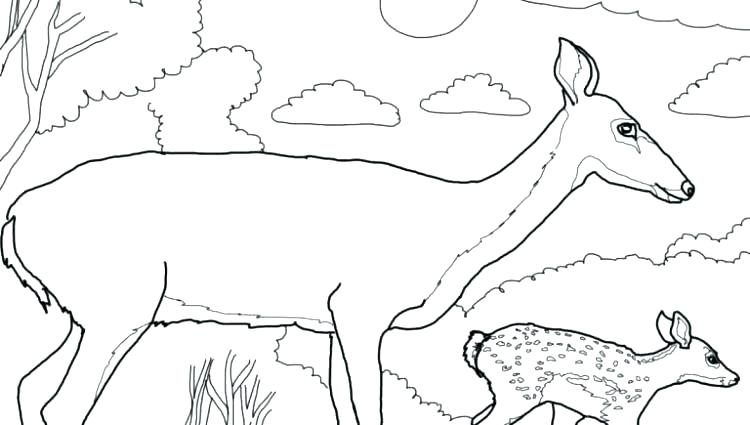 750x425 Deer Coloring Pages Whitetail Deer Coloring Pages Deer Head