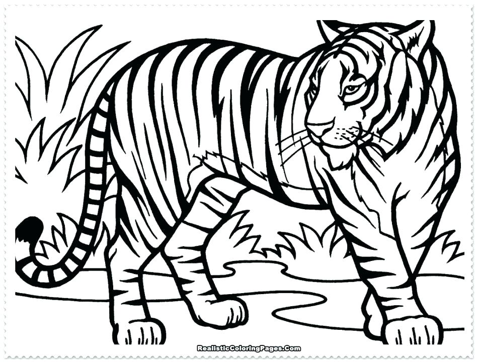 White Tiger Coloring Page