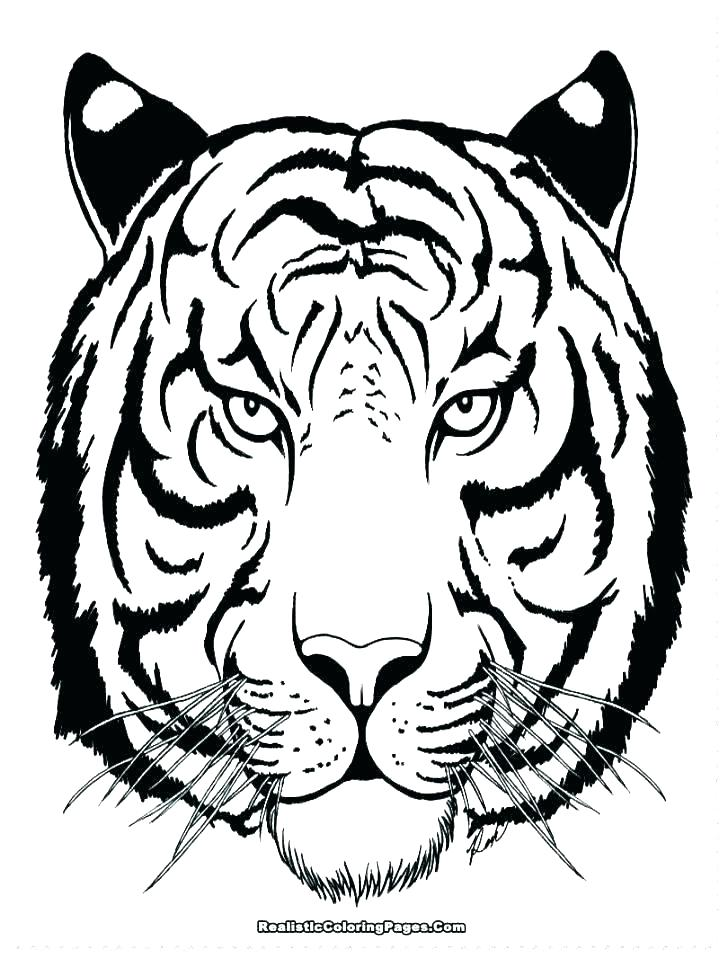 728x958 Free Tiger Coloring Pages Tiger Pictures To Color White Tiger
