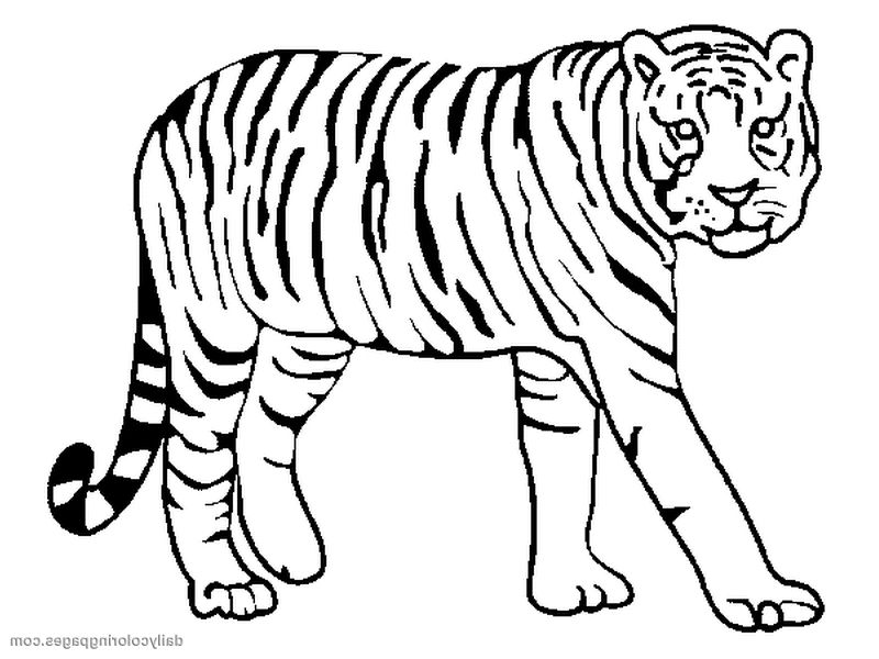 800x600 Coloring Pages Tigers