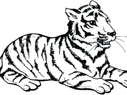 440x330 Tiger Color Page Free Tiger Coloring Pages Tiger Coloring Pages