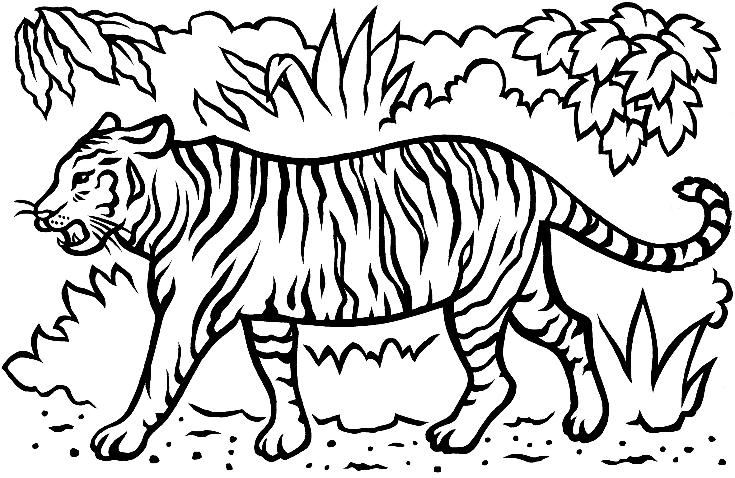 2362x1538 Tiger Coloring Page Template White Tiger Coloring Pages Coloring