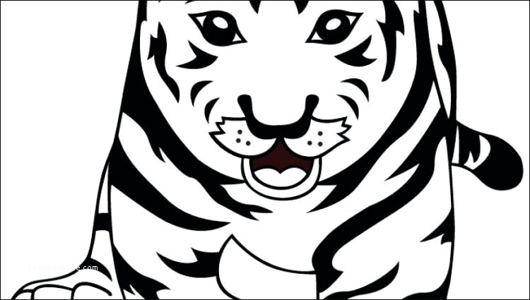 750x425 Best Baby White Tiger Coloring Pages For Your Wall Lovebird