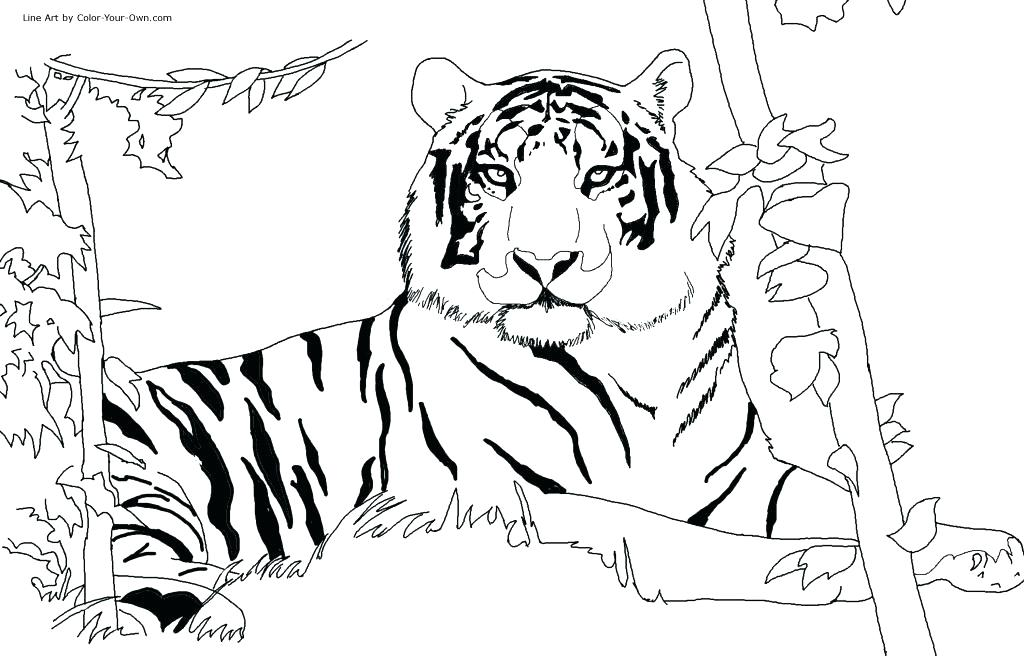 1024x656 Tiger Coloring Picture Coloring Pages Of Tigers Tiger Coloring