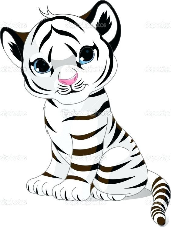 564x749 White Tiger Coloring Pages Baby Tiger Free Coloring Pages On Art