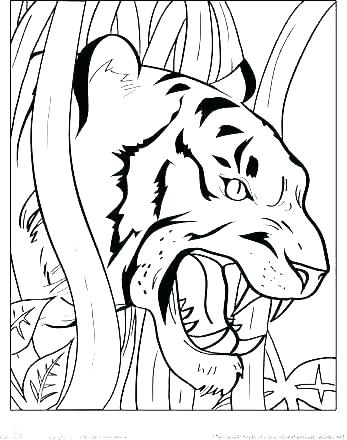 347x440 Coloring Page Of White Tiger Pages Cute Tigers Color Pictures