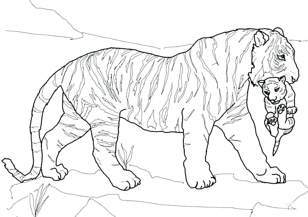 1024x722 White Tiger Coloring Pages Ultimate Spiderman White Tiger Man