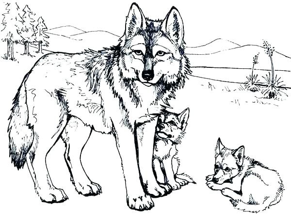 the best free wolf drawing coloring page images download