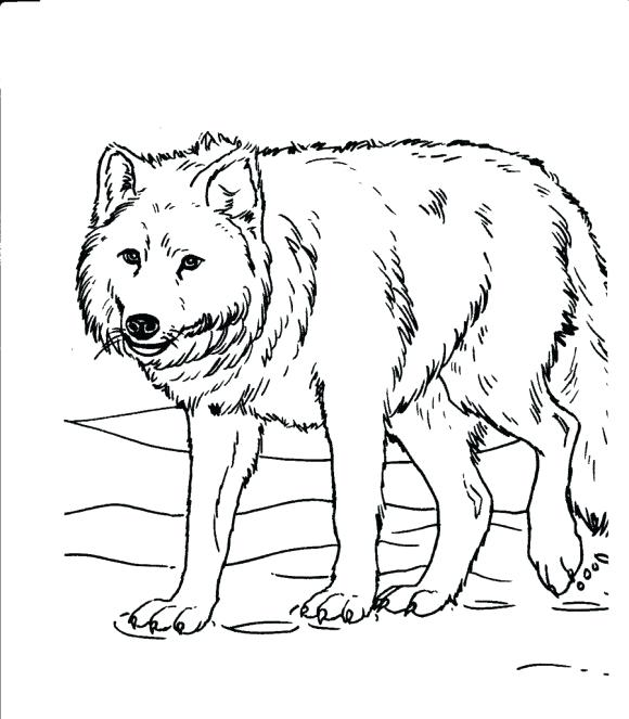580x663 Wolf Coloring Pages For Adults White Wolf Drawing Free Printable