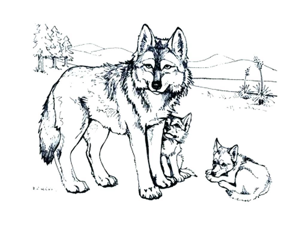 1000x773 Wolf Coloring Pages To Print Free Wolf Coloring Pages Printable