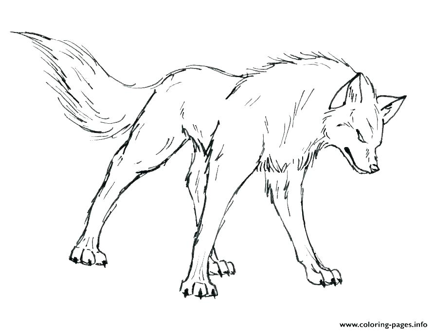 894x682 Coloring Pages Wolf