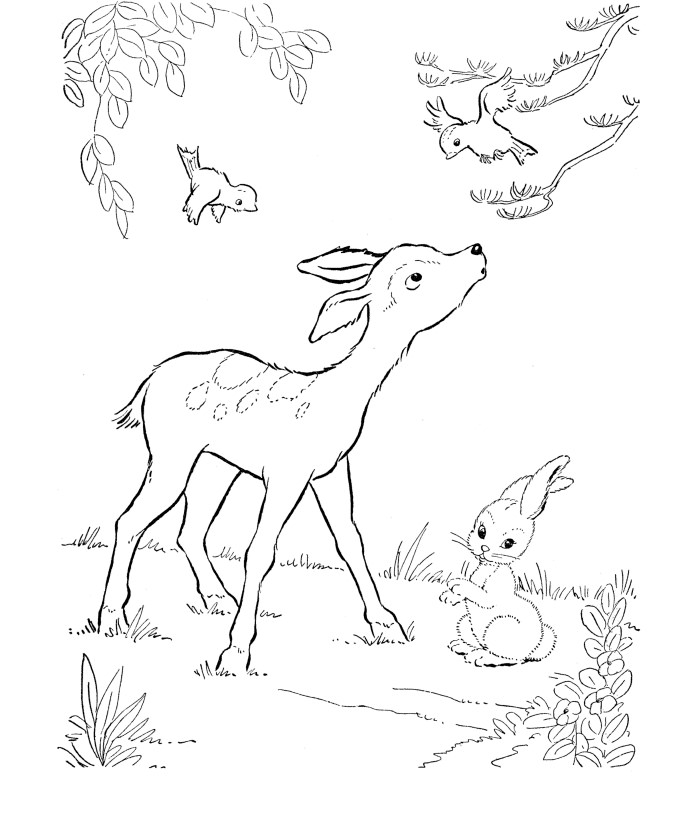Whitetail Buck Coloring Pages
