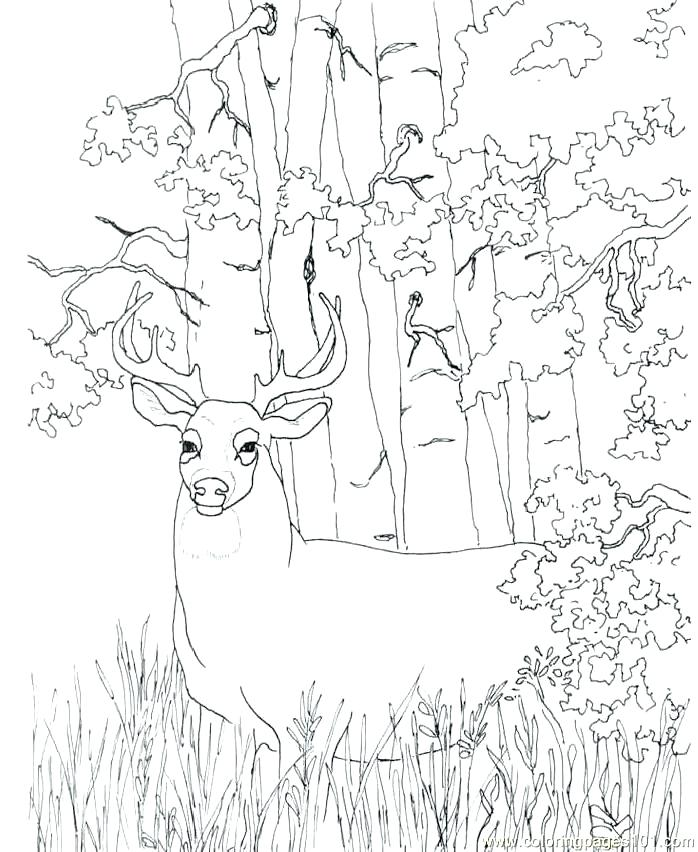 698x852 Free Deer Coloring Pages Deer Color Pages Deer Coloring Pictures