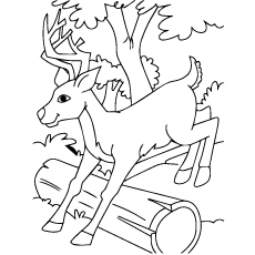 230x230 Top Deer Coloring Pages For Your Little Ones