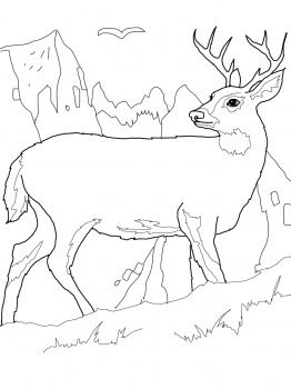 262x350 White Tail Deer Coloring Page Preschool