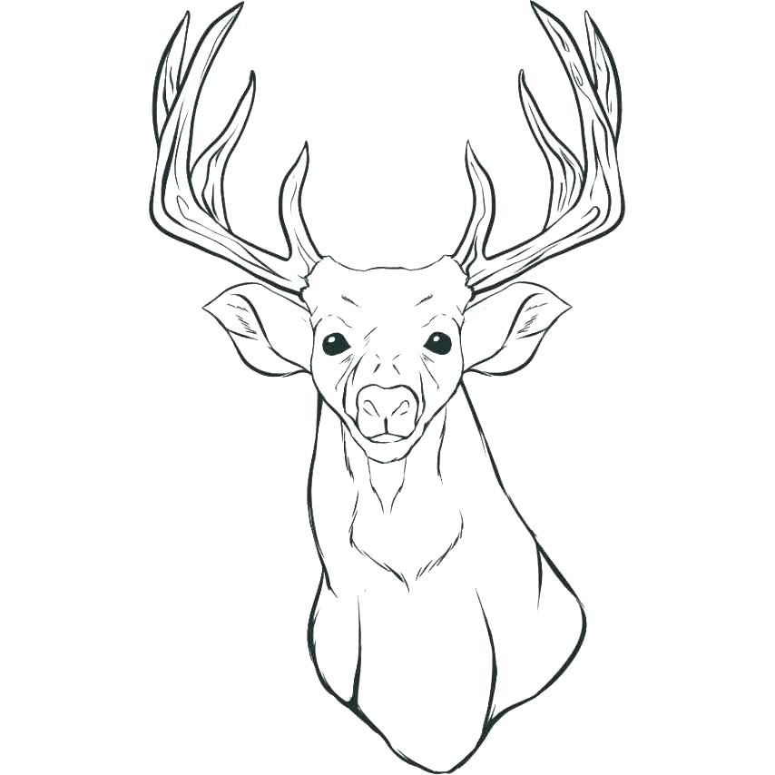 854x854 White Tailed Deer Coloring Pages Deer Pictures To Color Deer