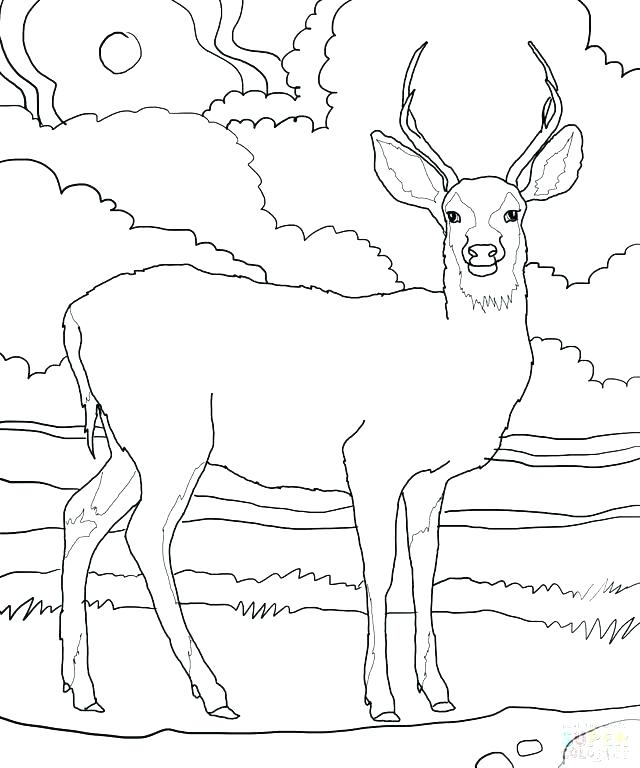 640x768 Whitetail Deer Coloring Pages