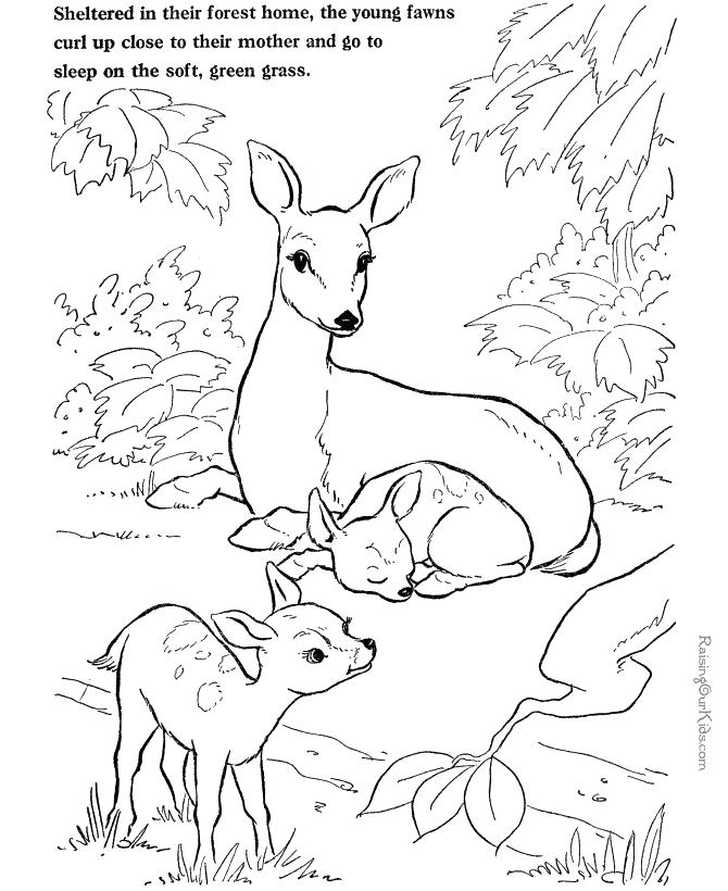 670x820 Whitetail Deer Coloring Pages Click To See Printable Version