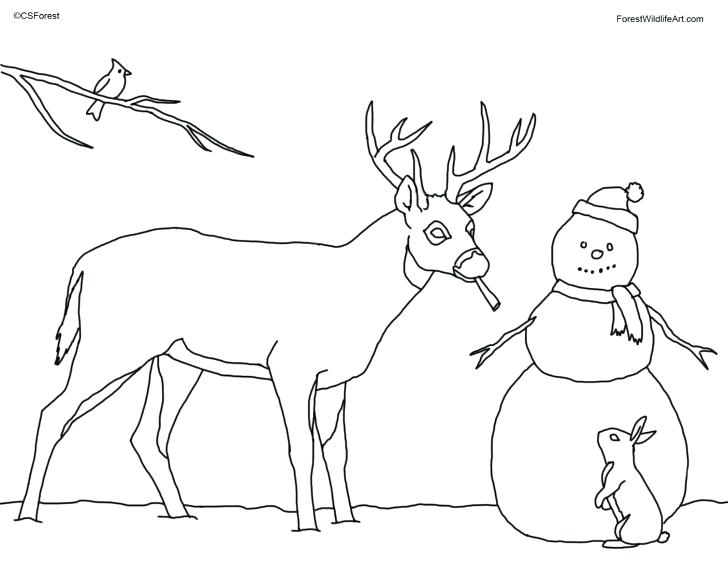 728x562 Whitetail Deer Coloring Pages Coloring Page Deer Pages Of Baby