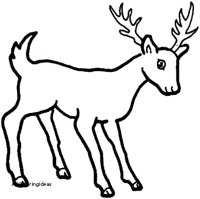 687x684 Whitetail Deer Coloring Pages Deer Coloring Pages Baby Deer