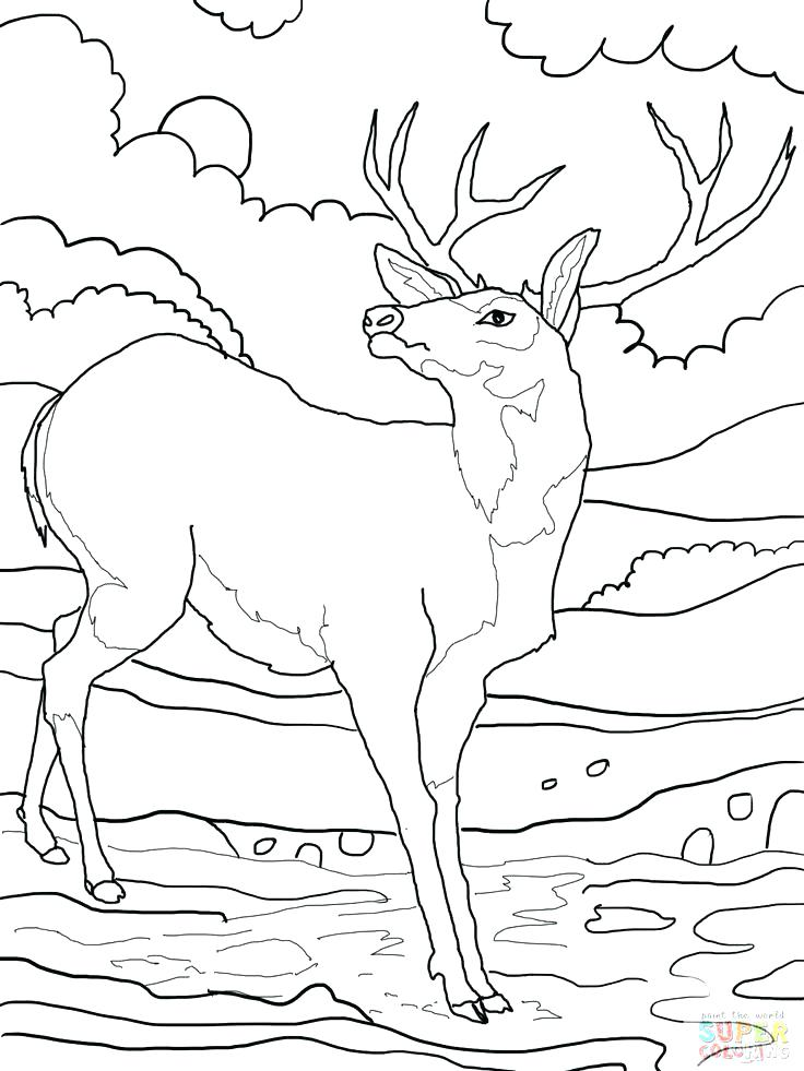 736x981 Whitetail Deer Coloring Pages Realistic Whitetail Deer Coloring