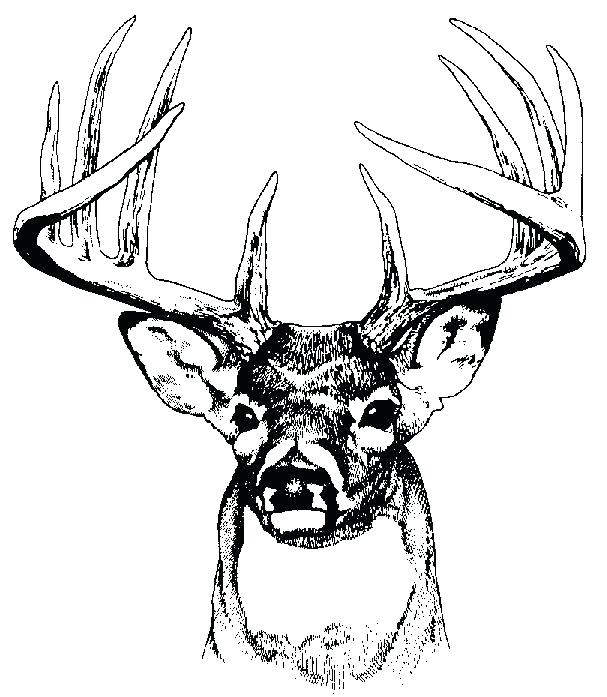 607x697 Whitetail Deer Coloring Pages Running Coloring Pages Elk Coloring