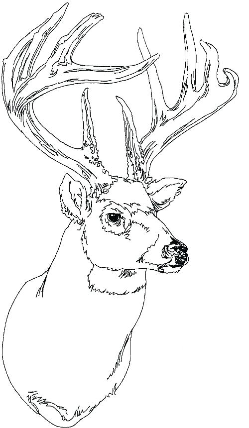 500x860 Whitetail Deer Coloring Pages Whitetail Deer Coloring Pages Best