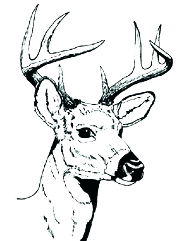 618x805 Whitetail Deer Coloring Pages