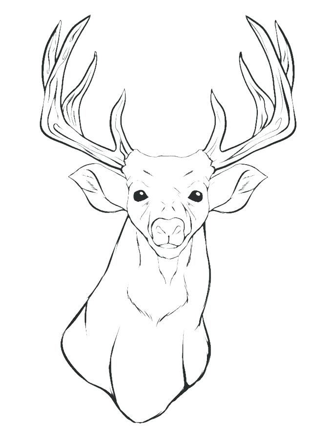 680x911 Deer Coloring Pages A Deer Head Coloring For Kids Animal Coloring